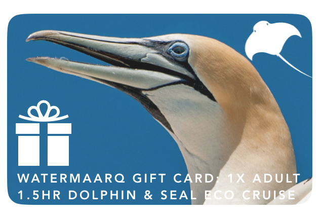 Gift Card 1.5hr Dolphin & Seal Watching Cruise Adult