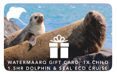 Gift Card 1.5hr Dolphin & Seal Watching Cruise Child