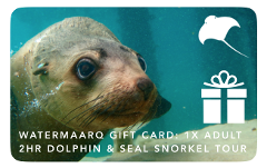 Gift Card 2hr Dolphin & Seal Swim Reef Snorkel Tour Adult