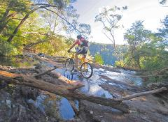 Rainforest Mountainbike Tour
