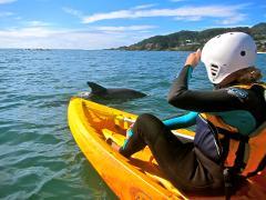 Dolphin Kayak Tour