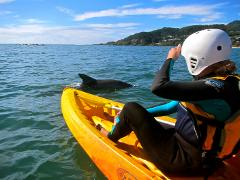 Dolphin Kayak Tour in Byron Bay