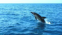 Boat Tour - Dolphin Watching