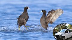 Observação de Aves - Lagoa de Albufeira com transfer
