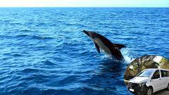 Observação de Golfinhos com transfer