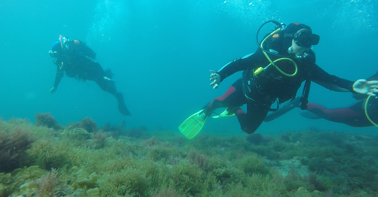 Scuba Diving - Guided Dives
