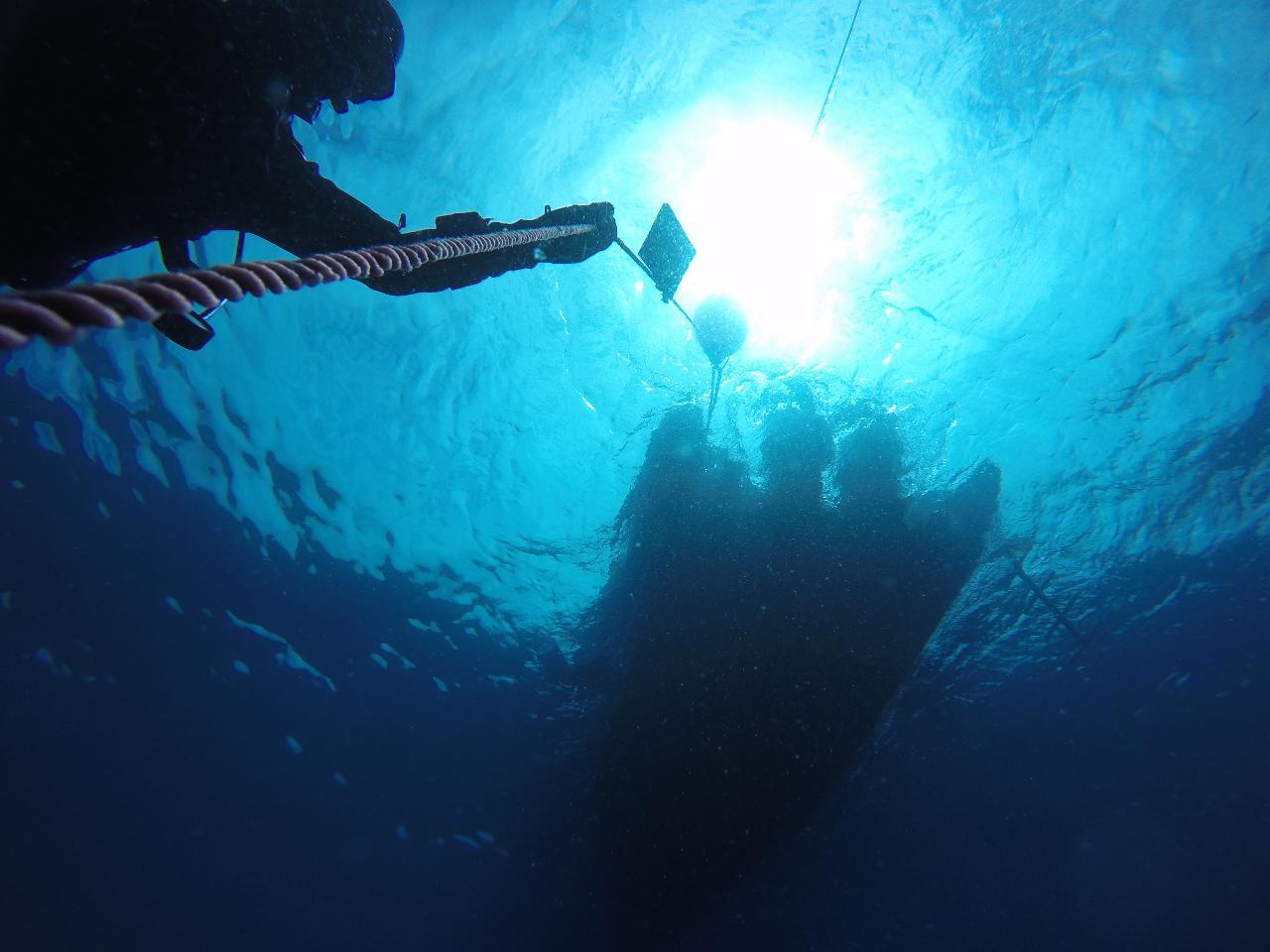 Mergulhos Guiados na região da Arrábida