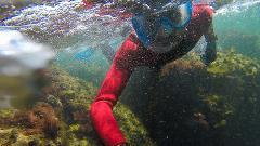 Snorkeling - Descobrir o Parque Marinho com transfer