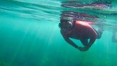 Snorkeling - Ribeiro de Cavalo