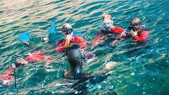 Descobrir o Parque Marinho em Snorkeling