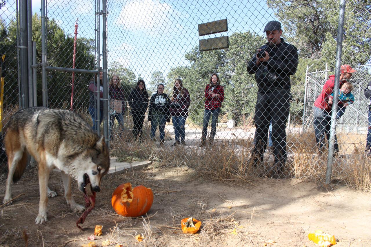 Howl-o-Ween Feeding Tour
