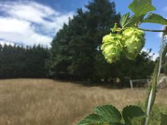 Hop Harvest Tour - Scheduled Day Tour