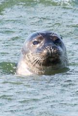 Seal Watching Tour