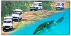 Land & Sea Safari