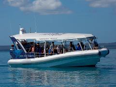 Hervey Bay Ultimate Whalewatch
