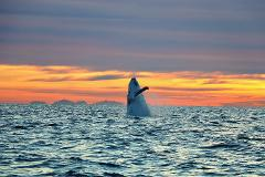Sunrise Whale Photography Experience