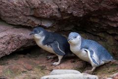 Akaroa Well-Being Eco-Safari Day Tour from Christchurch: Penguins nature safari option