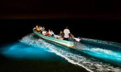 Bioluminescence at Manialtepec Lagoon