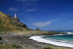 Full day Palliser Bay tour