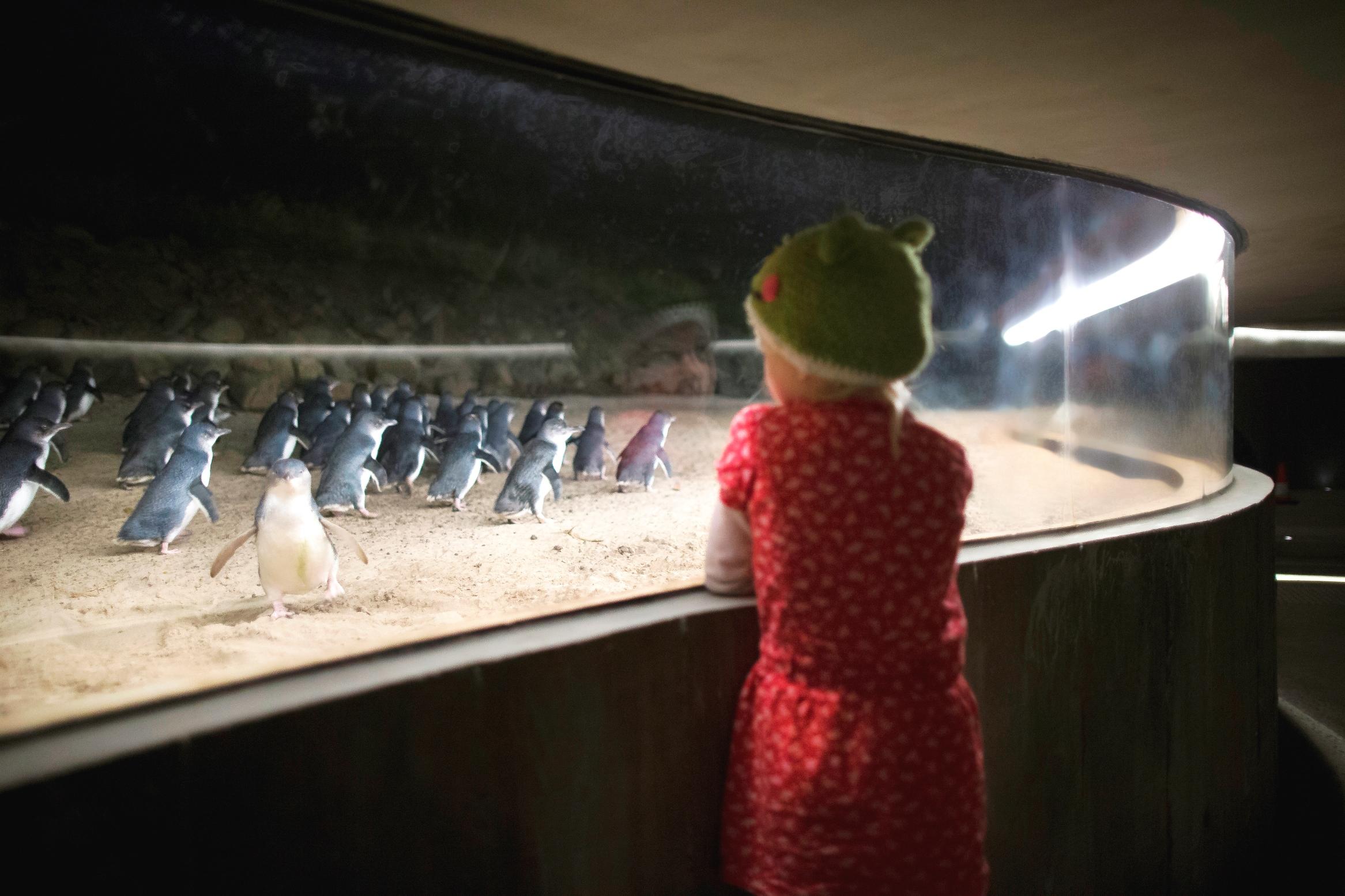 Premium Penguin Express
