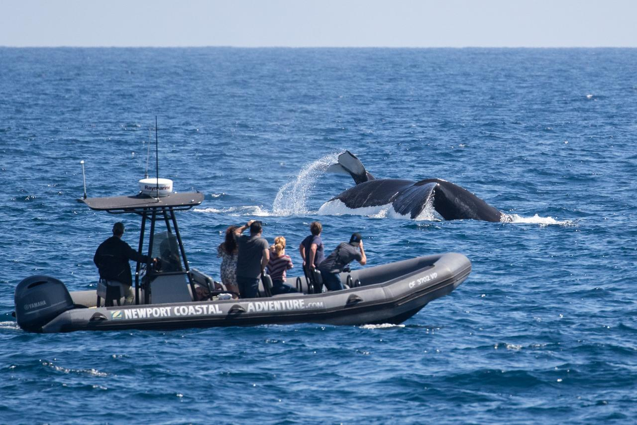 Private Whale Watching Adventure (1 to 6 guests) & (7 to 12 guests)