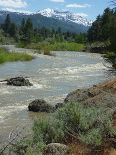 Carson River Full Day Rafting Trip (Class II)